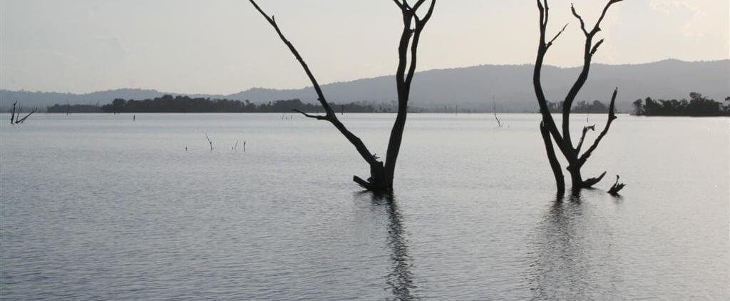 Brokopondo Meer mit Baum