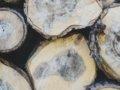 Auswirkung der Qualitäten von Kalamitäts-Rundhölzern